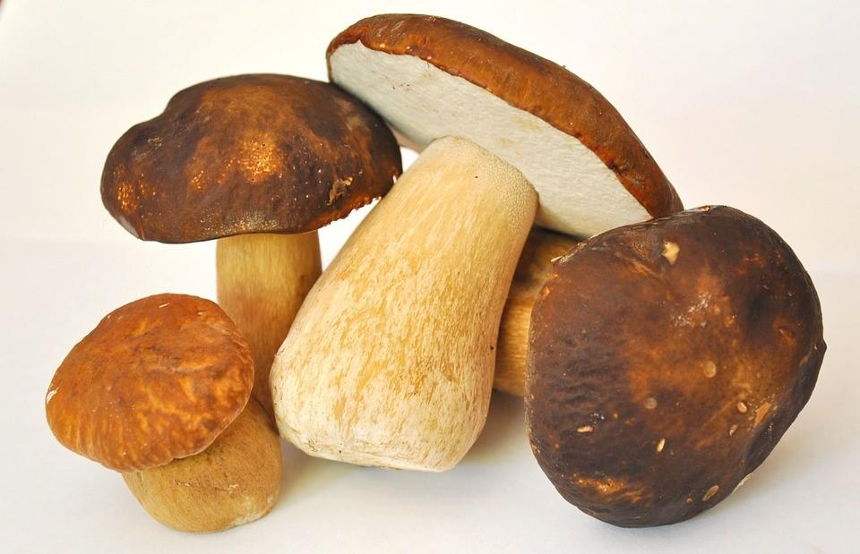 Mushrooms to illustrate the recipe.